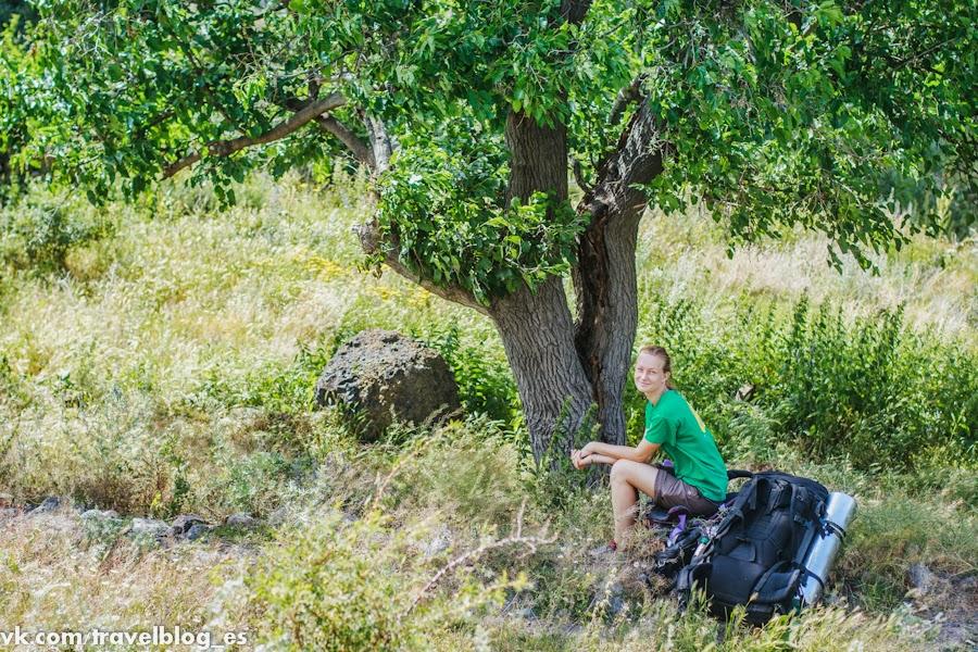 фото под тутовым деревом