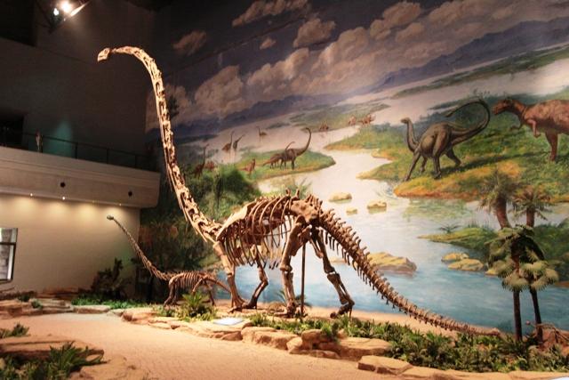 Кировский палеонтологический музей