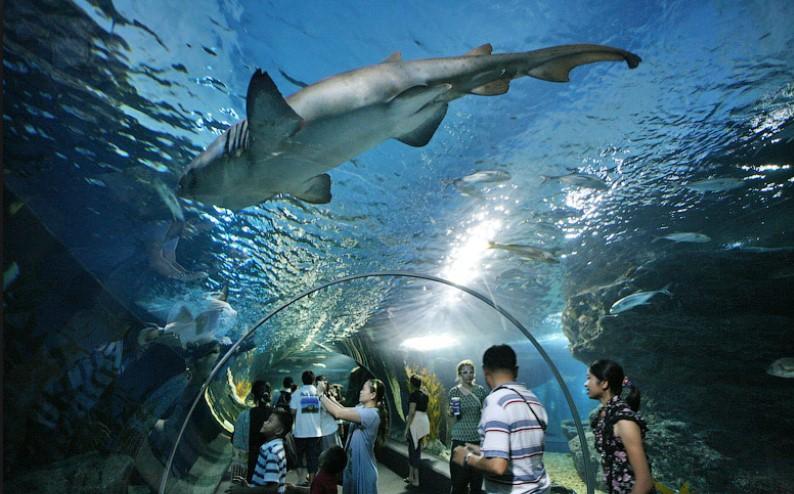 Тайский океанариум