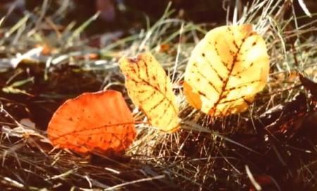 Осенние путешествия