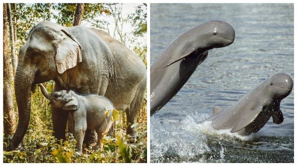 слоны и пресноводные дельфины