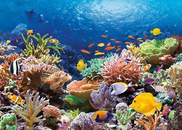 обитатели Большого барьерного Рифа